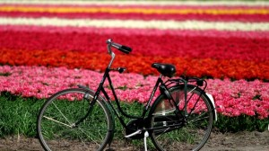Biking - Flowers