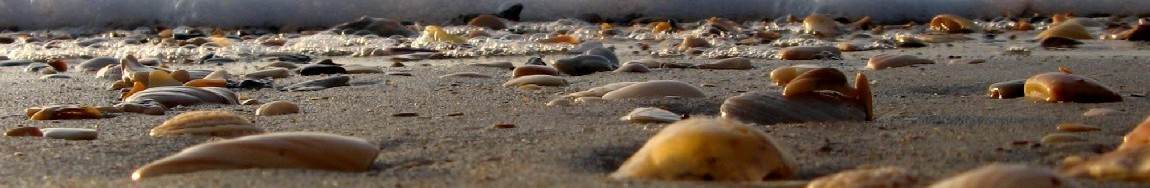 Once Upon A Pebble, One Step Closer … New Day, New Opportunity, New You !